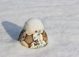 Pelota en la nieve